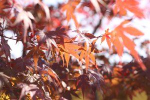 もうすぐ秋の季節。。。