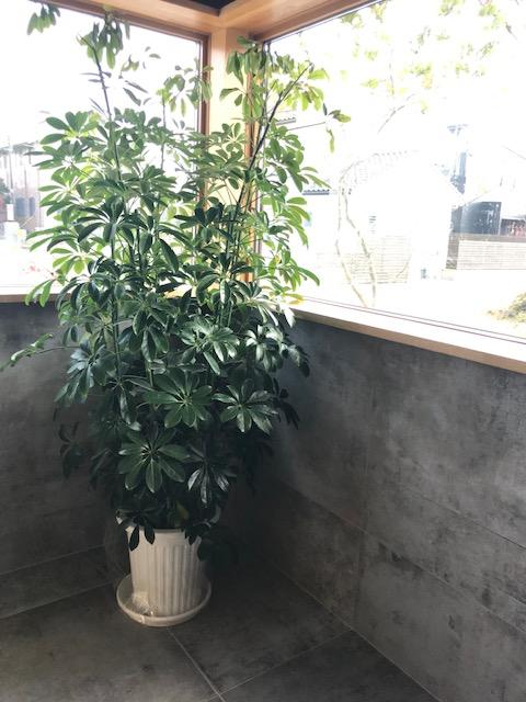 観葉植物✩✩