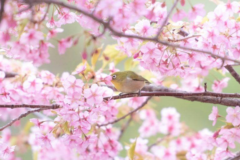 春と言えば…