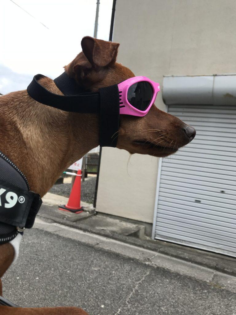 グラサン犬